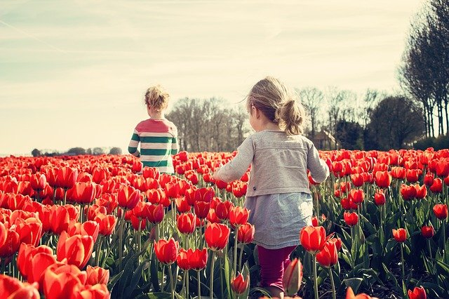 holky v tulipánech