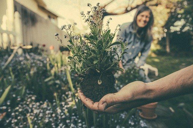 trs květin na zasazení