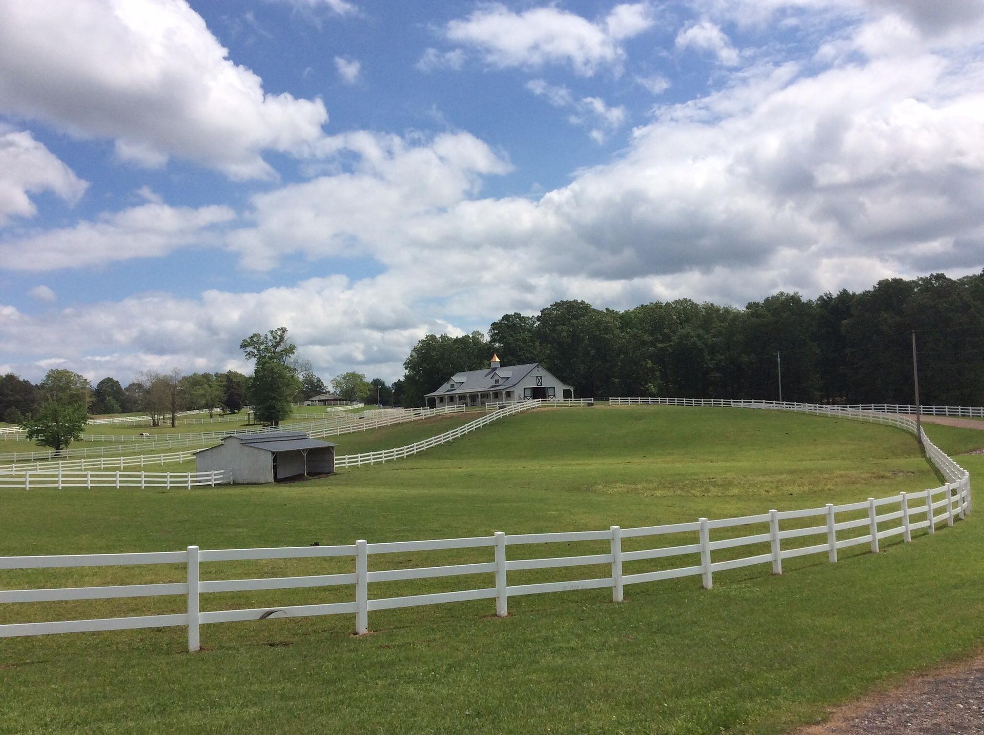 pasture-724492_1920
